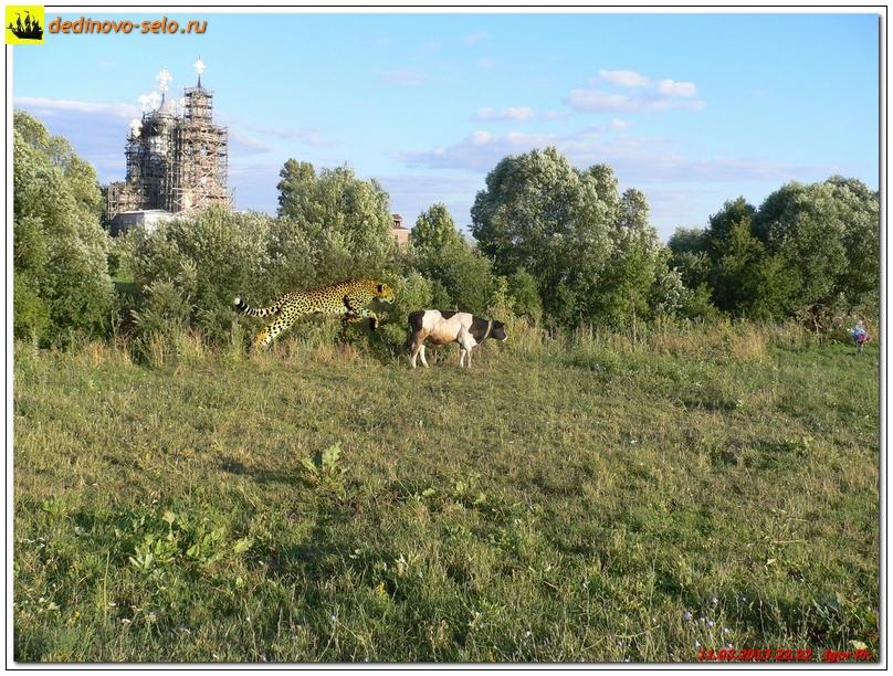 Фото dedinovo-selo.ru_PhotoJokes_00002.jpg
