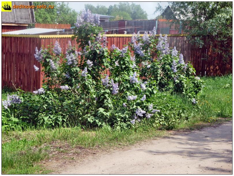 Фото dedinovo-selo.ru_SpringFlowering_00009.jpg