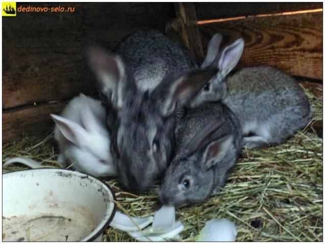 Кролики в клетке. Село Дединово