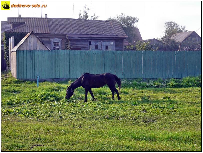 Конь на повороте к молзаводу. Село Дединово