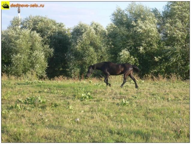 Лошадь у реки Ройки. Село Дединово