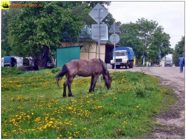 "Конь на ""базаре"". Село Дединово"