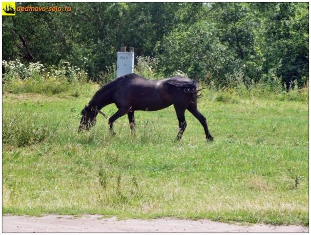 Конь около р.Ройки. Село Дединово