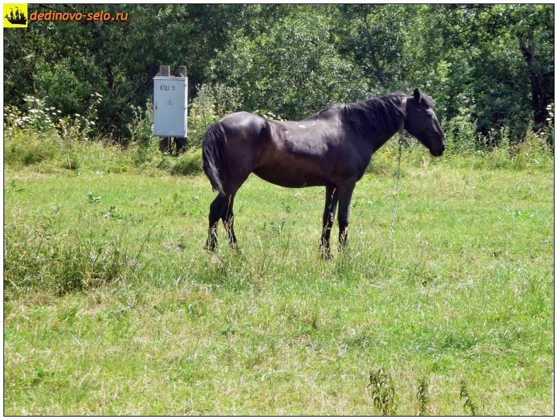 Конь на берегу р. Ройки. Село Дединово