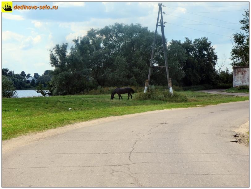 Конь около молзавода. Село Дединово