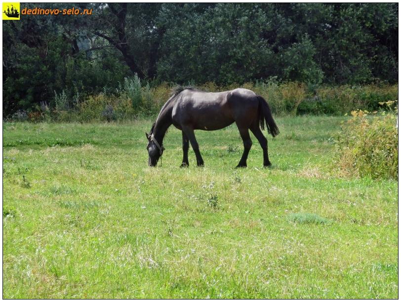 Конь на месте слияния рек Ройки и Оки. Село Дединово