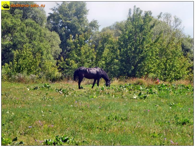 Конь на берегу реки Ройки. Село Дединово