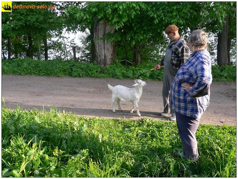 Козлик, село Дединово
