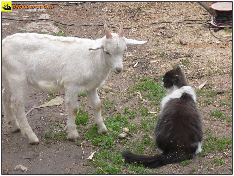 """Козлик и кот (""""Ты Хто?""""), село Дединово"""