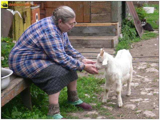 Козлик ласкается, село Дединово