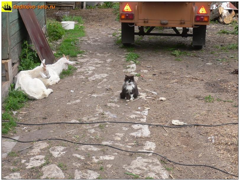 Животные на дворе, Дединово