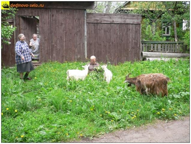 Животные и люди, Дединово